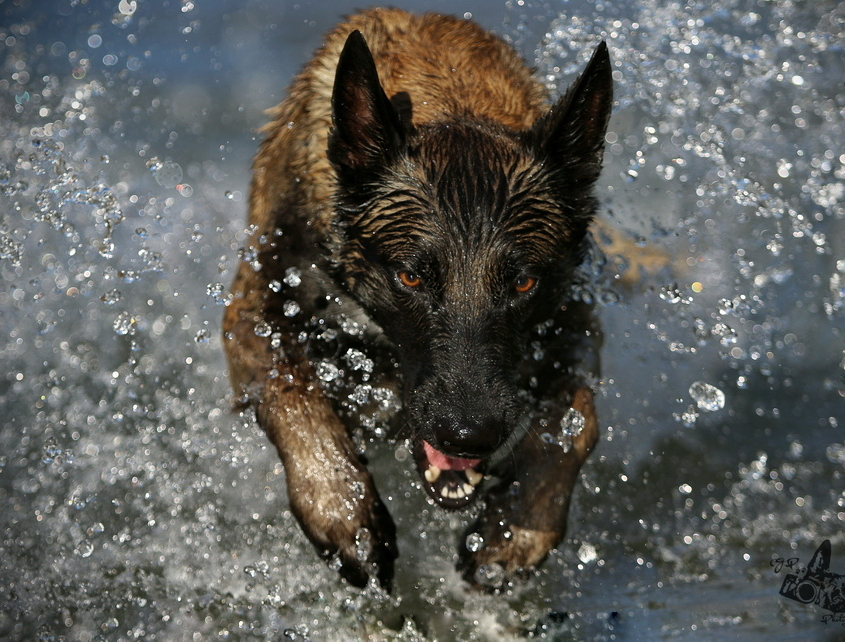Hundesitten Spazierservice Walkingdogs